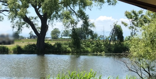 三重湖公園キャンプ場の道路エリア全景