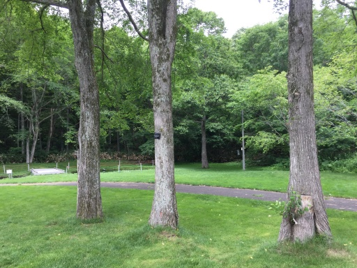 北広島市自然の森キャンプ場のキャンプサイト
