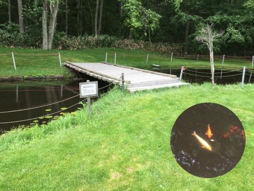北広島市自然の森キャンプ場のコイが泳ぐ池