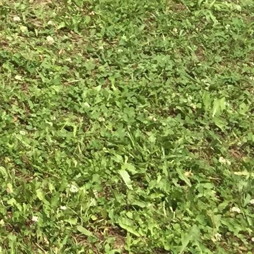 栗山さくらキャンプ場の芝生の状態